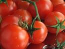 Initium si Codex Alimentarius
