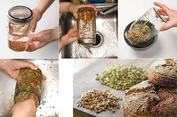 incoltire cereale Cereale – macerare, fermentare, incoltire (III)